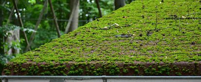 Roof moss on roof